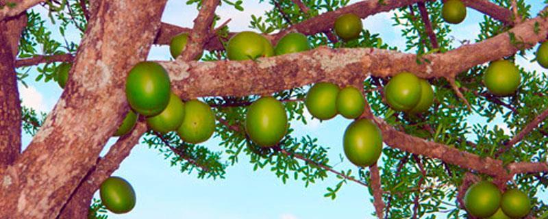 Frutos Cinegetico Jolapilla - Servicios